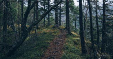 Il rito funebre nel 2021 – e se diventassimo alberi?